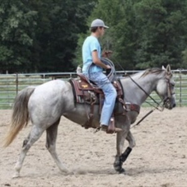 SAU Stolen Horses_-7432442906326578596