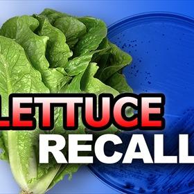 Lettuce Recall_8108175262658676001