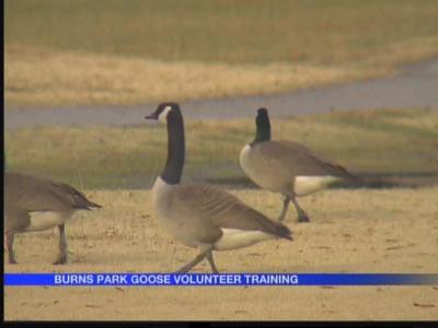 Burns Park geese volunteer training_-8817250060562182171