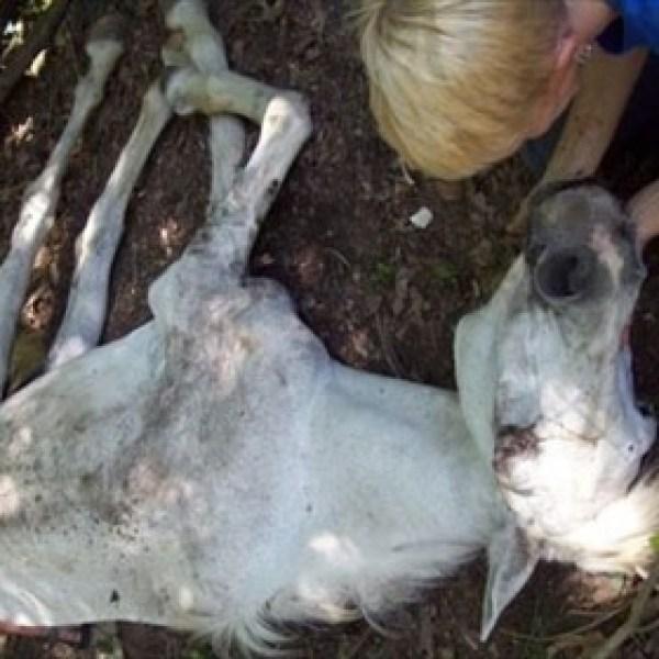 Animal Cruelty_8025027987328288083