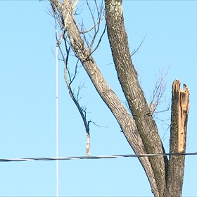 Tree trimmer death_48749113509105444