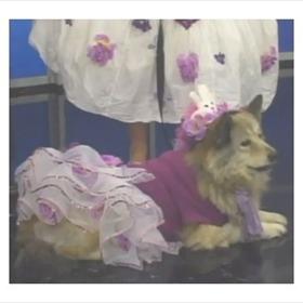 Dog-Gone Easter Egg Hunt_4617413519391017413
