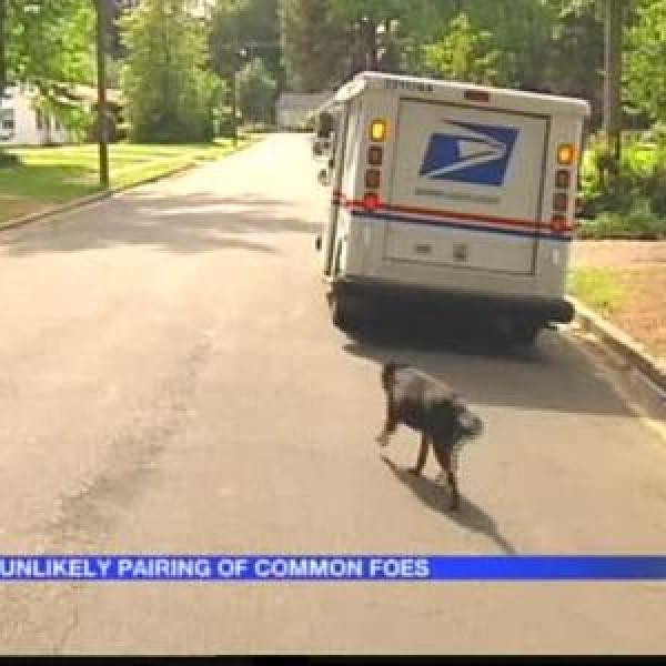 Dog Befriends Mail Carrier In Arkadelphia_338413197282528700