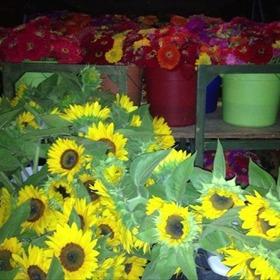 Wye Mountain Flowers & Berries_-4964641699235217092