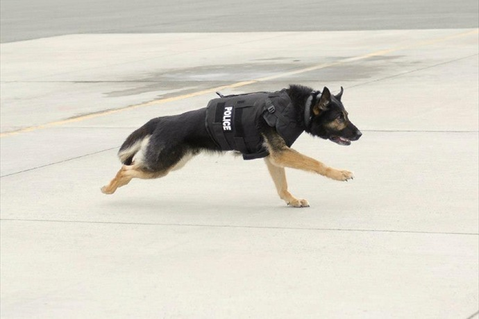 Photo of Vested Interest in K-9s, Inc. protective vest. (http__www.vik9s.org_)_-2154292996754617449
