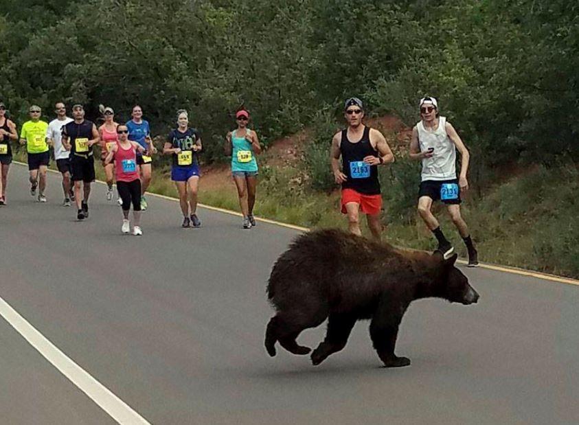 Bear at Garden of the Gods Race_274595