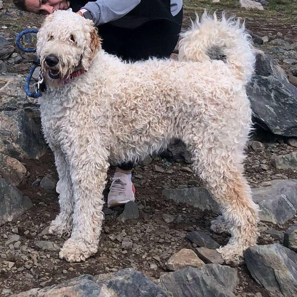 Family looking for dog lost in Chaffee County Jeep accident