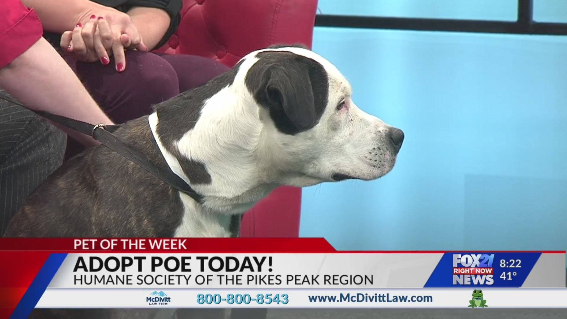 May 29 Pet of the Week: Poe