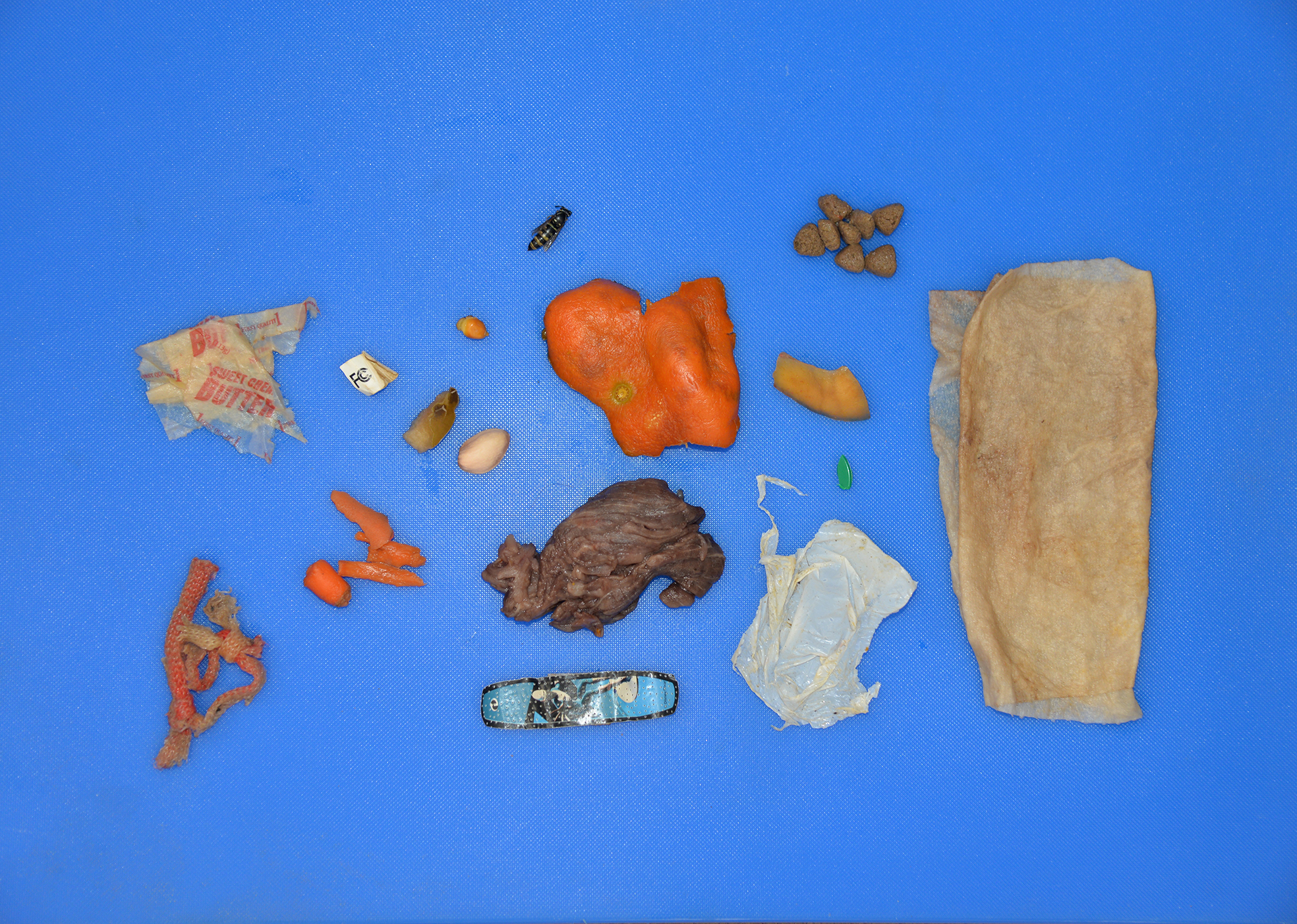 A photo of some of the stomach contents pulled from the sow during the necropsy showed it was full of a significant amount of trash. / Photo courtesy Colorado Parks and Wildlife