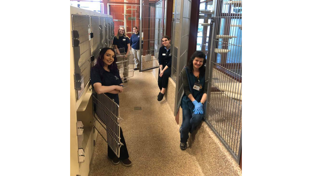 HSPPR staff show off the empty kennels after every cat was adopted from their cat adoption center Tuesday. / Photo courtesy HSPPR
