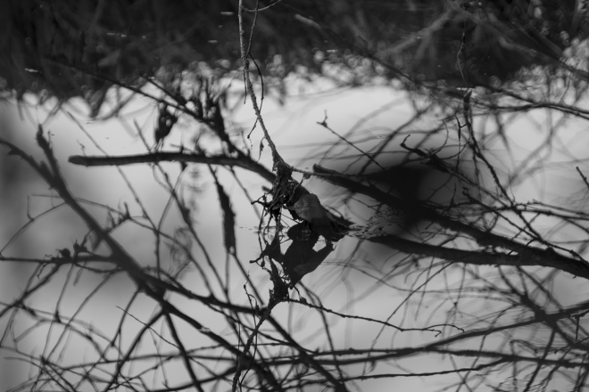 Reflections Photography Black White Water Nature