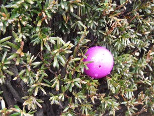 2015-easter-egg-hunt-111