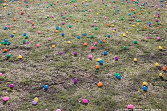 2016-easter-egg-hunt-1069