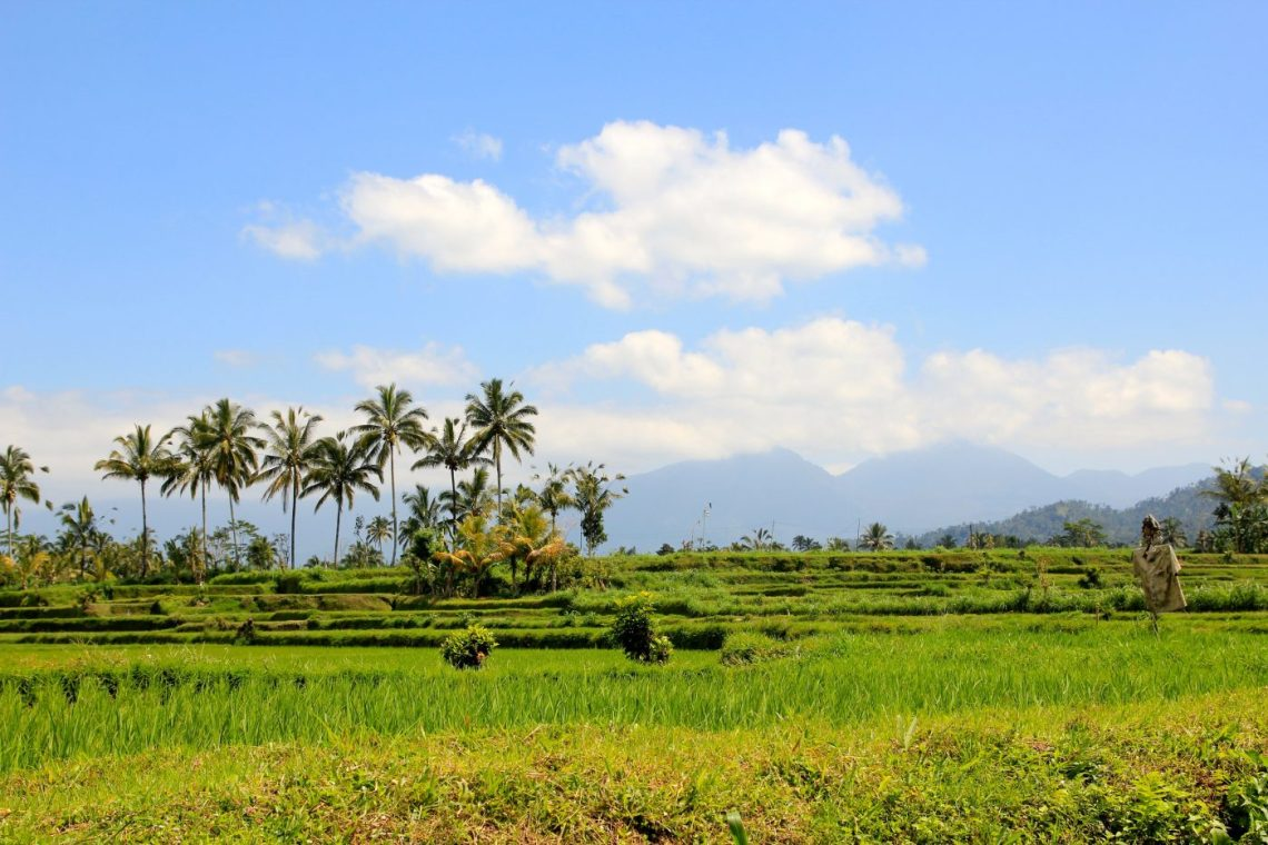 Travel to Indonesia - Balinese Farm