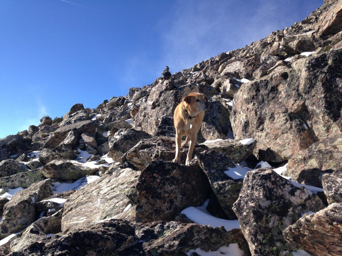 Snowshoe with a dog - climbing boulders