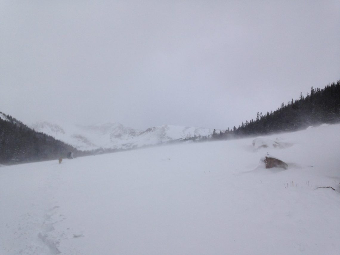 snowshoeing with a dog - bad conditions