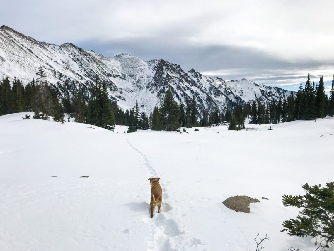 snowshoe with a dog