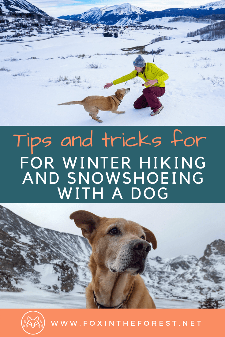 Tips and tricks for winter hiking with a dog. How to snowshoe with a dog. Getting outdoors in the winter with your dog. Tips and tricks for winter with a dog. #dog #travel #hiking #outdoors