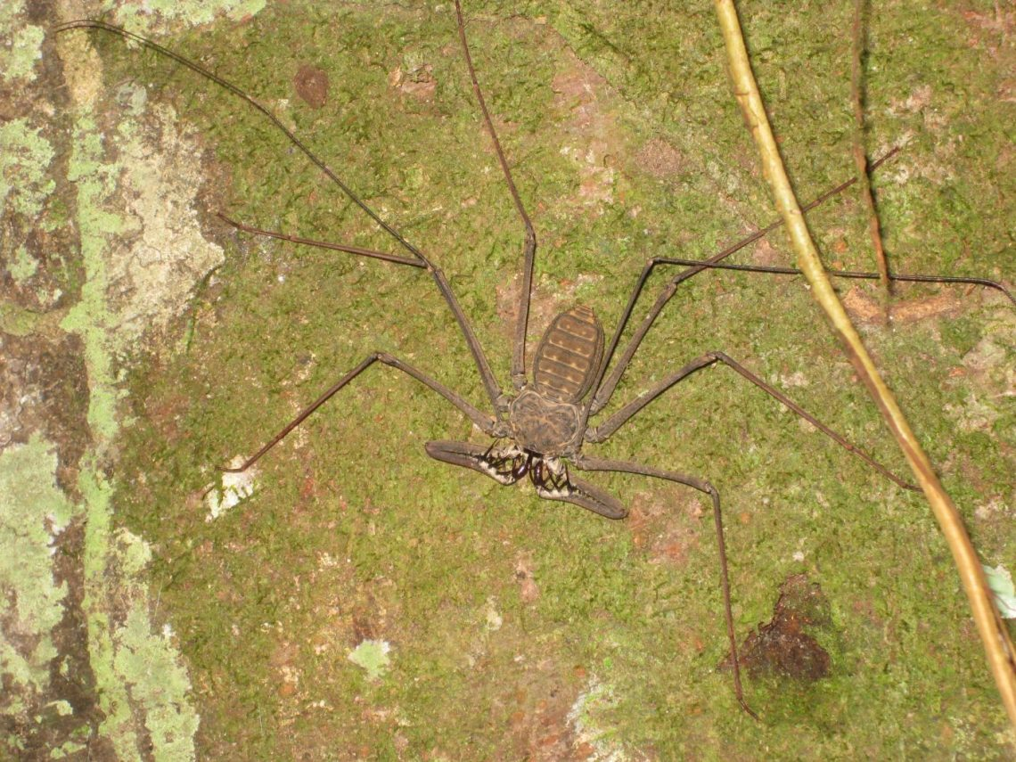Travel to the Peruvian Amazon - spider