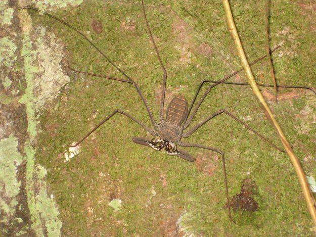 Travel to the Peruvian Amazon - spider