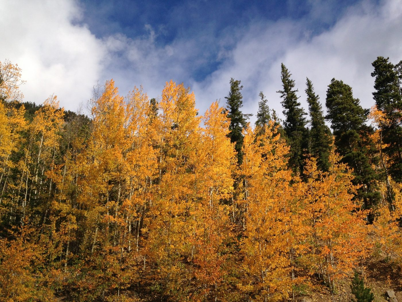 fall colors on the colorado trail