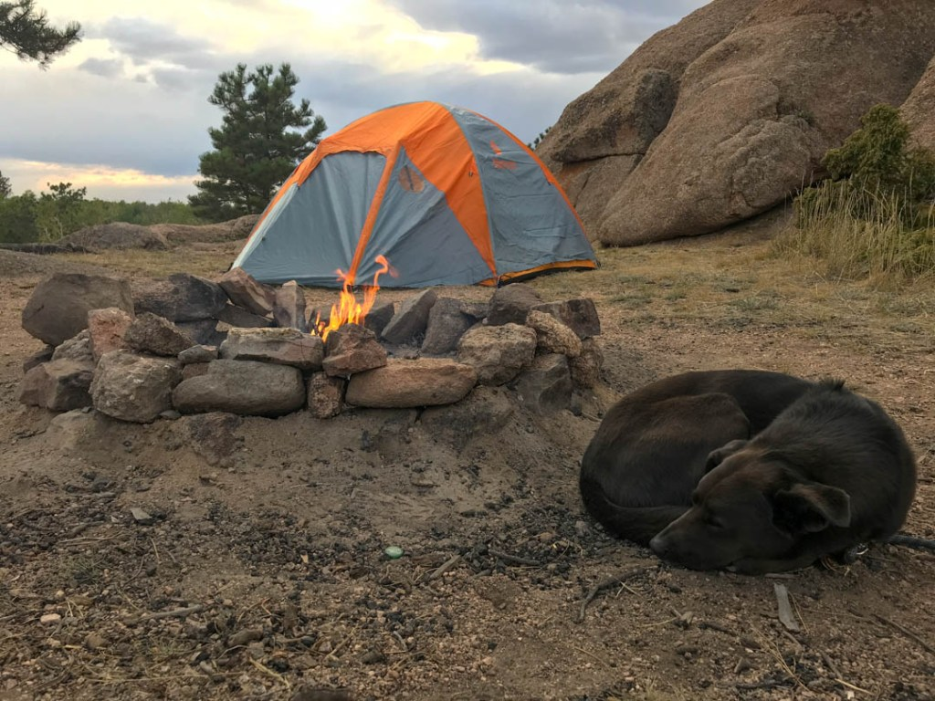 car camping with a dog