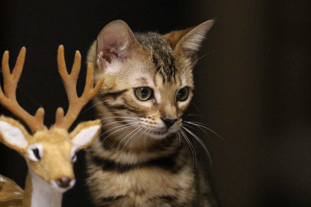 Phoebe (ohh, ist da ein Jäger? lauf Rudolf!)