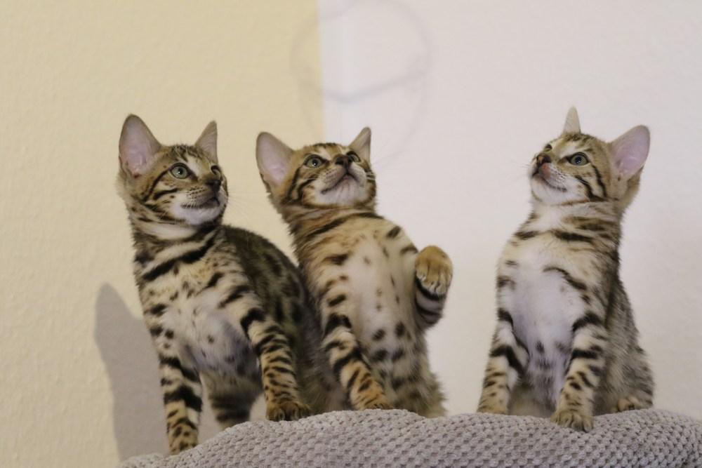 Drei mit stolzer Brust!