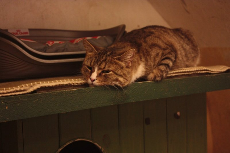 Hermitage Cats