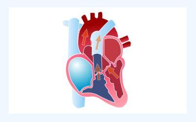 Como bate o coração 2
