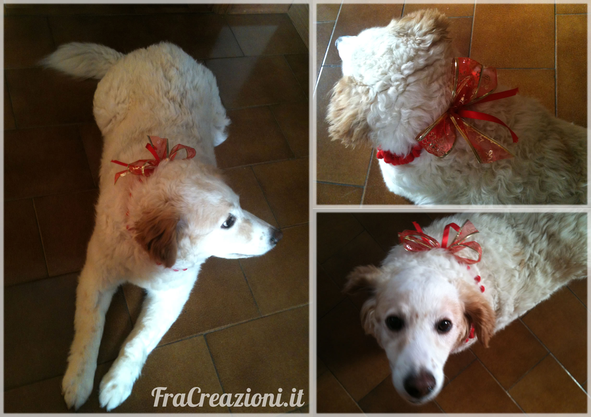 dolly natale