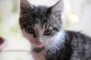 cat-1794898_640