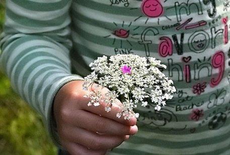 abbyflower.jpg