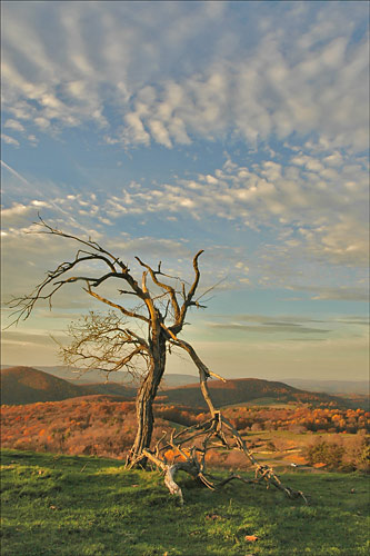 A wind-pruned tree from high on the Blue Ridge Parkway