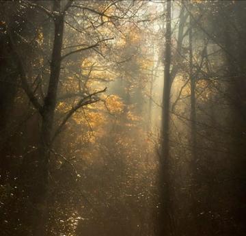 forestshadows.jpg