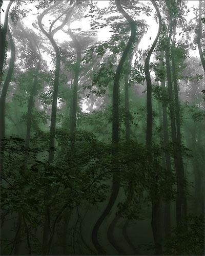 treedance.jpg