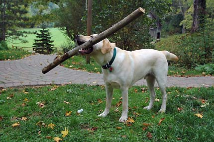 That's not a stick! THIS is a STICK!!