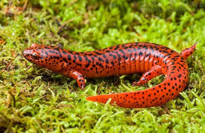 amphibianphotos.com