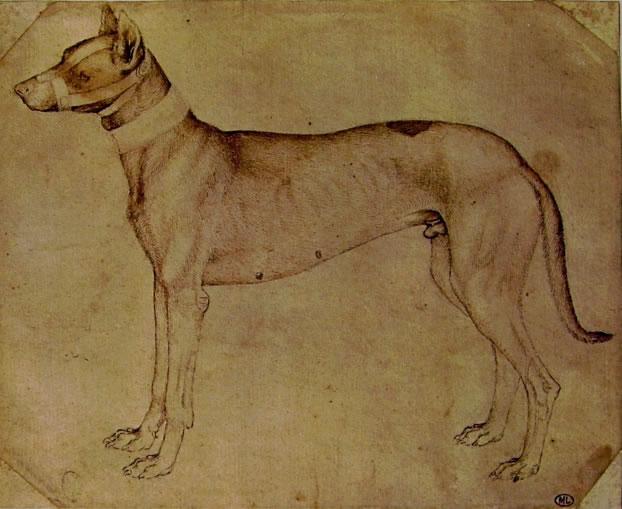 Pisanello: Cane da caccia