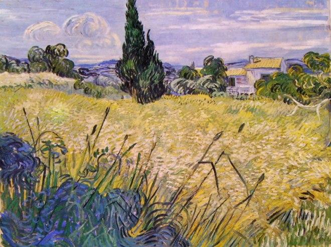 Campo verde di grano