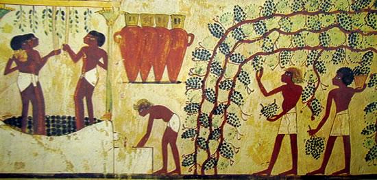 Vendemmia, Pigiatura dell'uva, e riempimento dei contenitori di vino, XVIII dinastia, Tomba di Nakht, Tebe