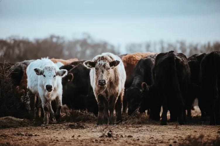 Agriturismi biologici