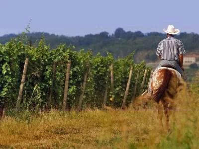 franciacorta strade del vino in lombardia