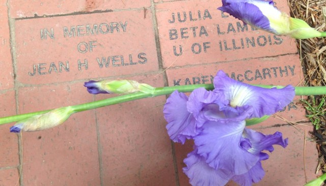 A quick trip to Monmouth, Illinois happened to be when iris was in bloom. An iris from Stewart House, where it all began for Kappa Kappa Gamma.
