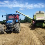 Wheat harvest in France