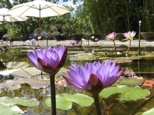 Indoor Water Lily Garden