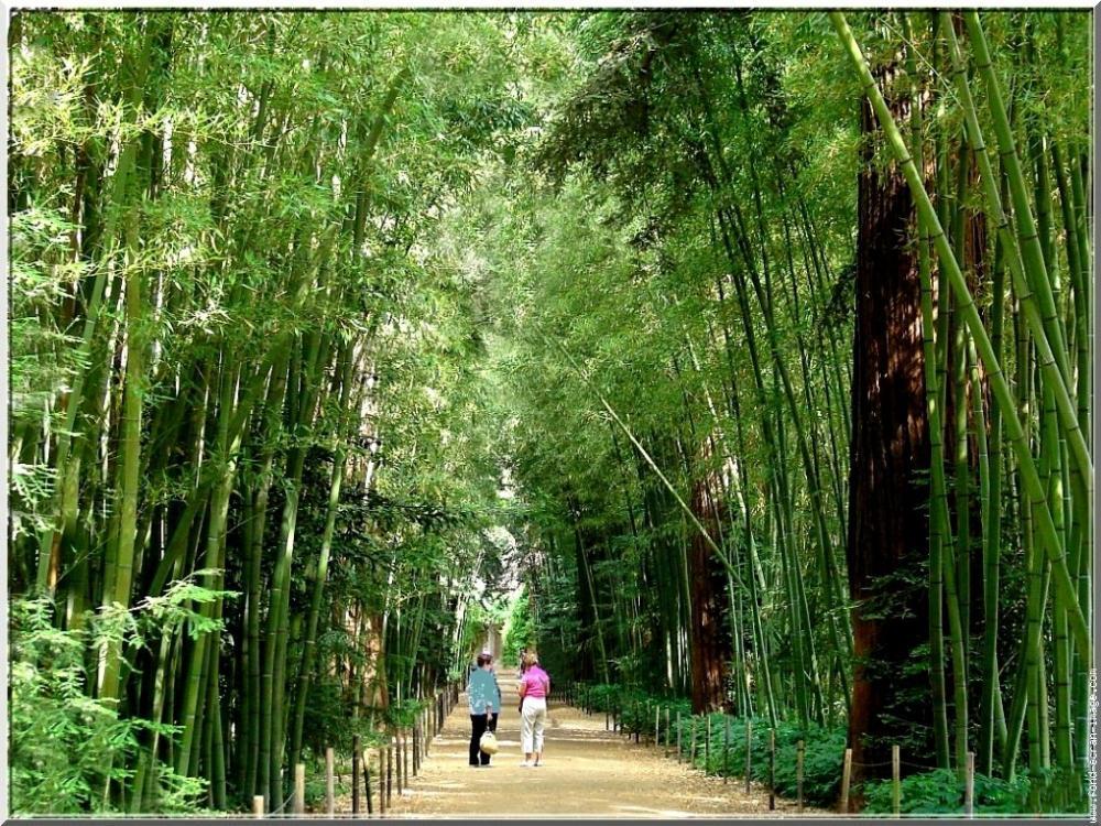 Photos La Bambouseraie De Prafrance Guide Tourisme