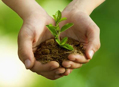 Les engrais et l'environnement