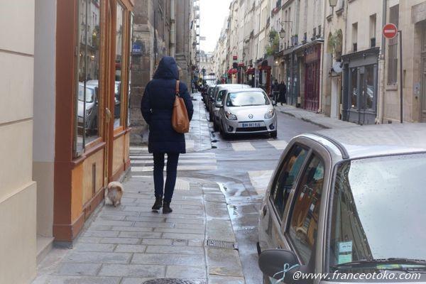 パリ 犬の散歩