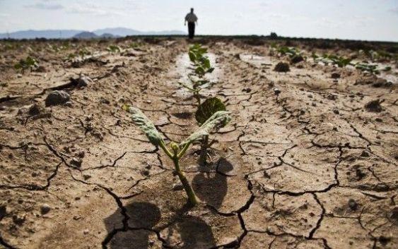 Lettere alla redazione | Alto Tirreno, Antonio Viggiano: 'Ancora un giorno senz'acqua e le colture moriranno'